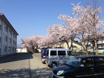 14.04.24-桜満開!!