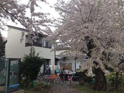 14.05.01-今年の桜4