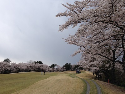 14.05.01-今年の桜2