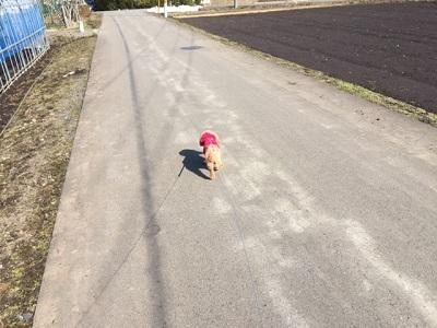15.03.09-春散歩2